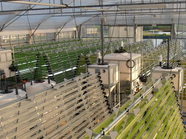 藻类培植的CO2供应控制